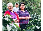 Honduras Santa Elena - Wet Process - Green Coffee Beans