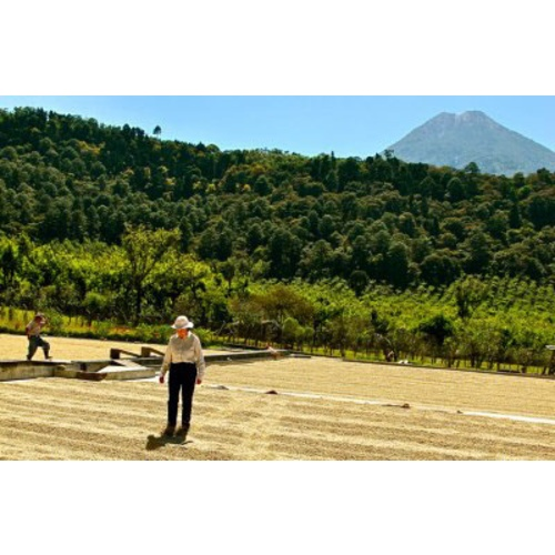 Mexico Chiapas - Wet Process - Green Coffee Beans