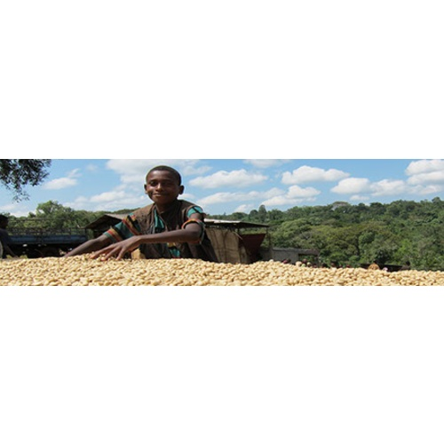 Ethiopia Sidamo - Natural Processed