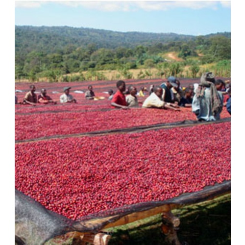 Ethiopia Harrar - Natural Process - Green Coffee Beans