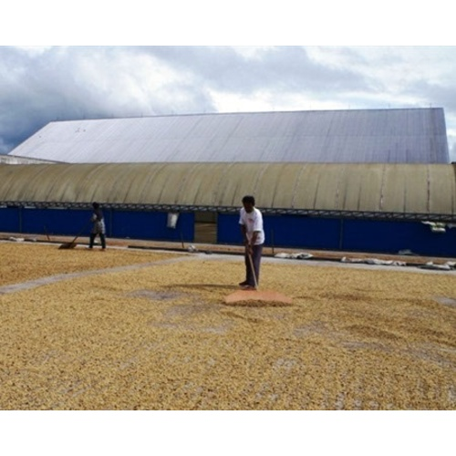 Indonesia Sumatra - Wet Process - Green Coffee Beans
