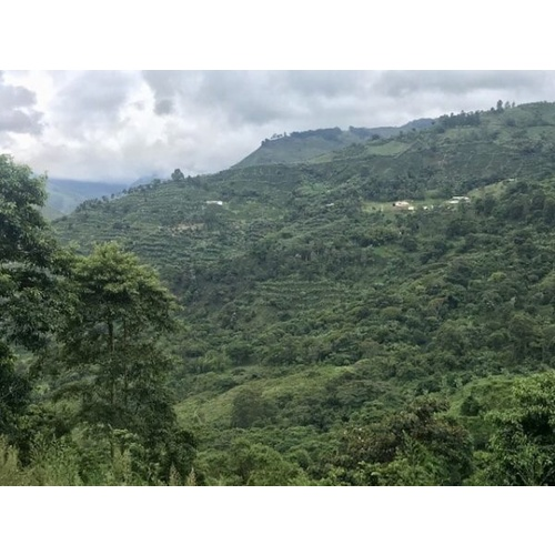 Colombia Finca Palmichal - Natural Process - Green Coffee Beans